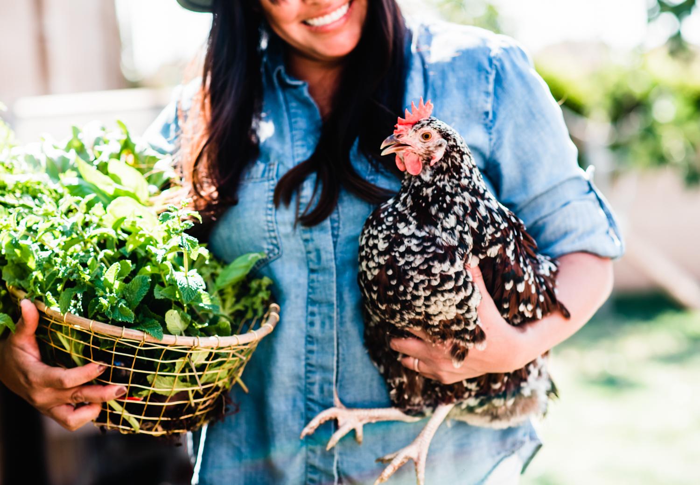 raising backyard chickens, laying hens